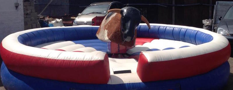 Rodeo Bull Options